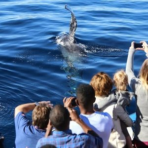 Groupon: Los Angeles 2.5 Hour Whale Watching and Dolphin Cruise