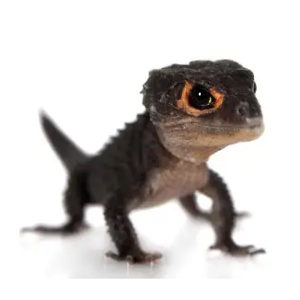 Petco: Pet Reptiles In-Store Only