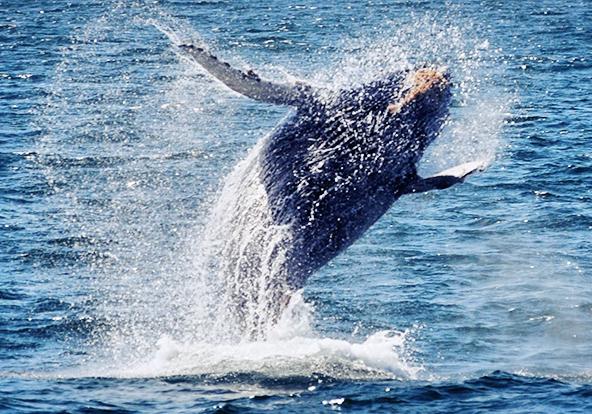 2.5小时观鲸游艇