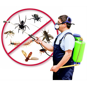Ways to Control Pest