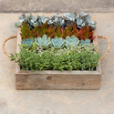 Succulent Reclaimed Garden Party Tray