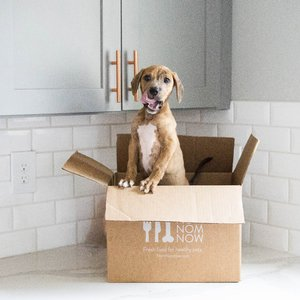 NOM NOM: Freshly Cooked Pet Food Subscription